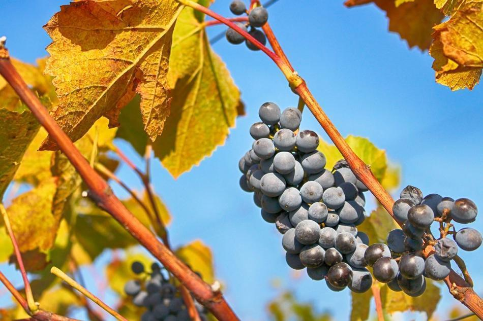 BARDOLINO RED WINE